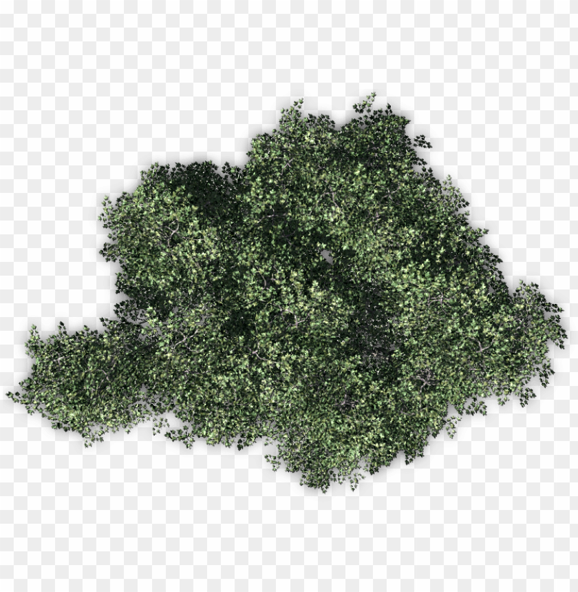 free PNG 06 feb 2009 - tree PNG image with transparent background PNG images transparent