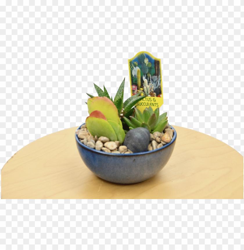 free PNG 1 succulent assortment in blue glazed pot pot - flowerpot PNG image with transparent background PNG images transparent