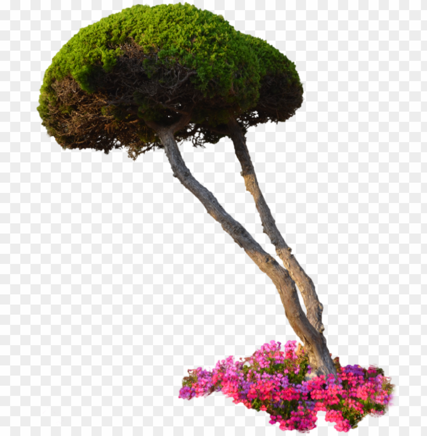 free PNG 10 free plants & flowers png images- at dzzyn - plants PNG image with transparent background PNG images transparent