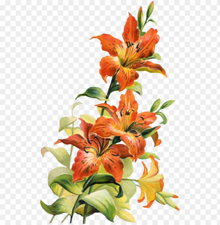 195832 tiger lily flower clipart free clip art images - tiger lily flower art PNG image with transparent background@toppng.com