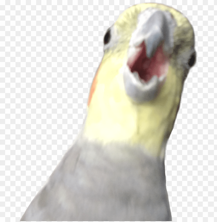 free PNG 23 mar - alex the honking bird PNG image with transparent background PNG images transparent