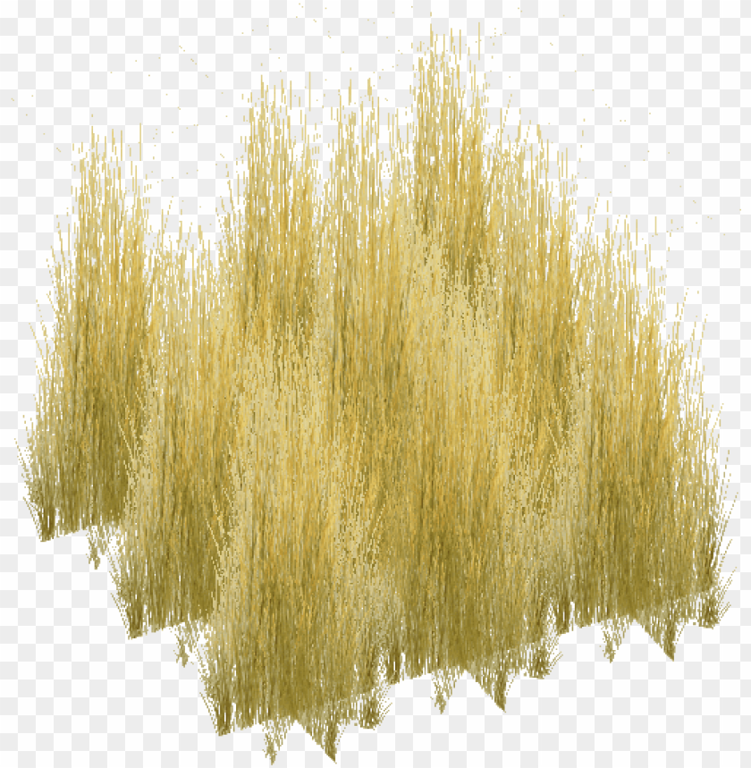 free PNG 3d tree, entourage, trees to plant, donuts, monitor, - tall grass texture PNG image with transparent background PNG images transparent