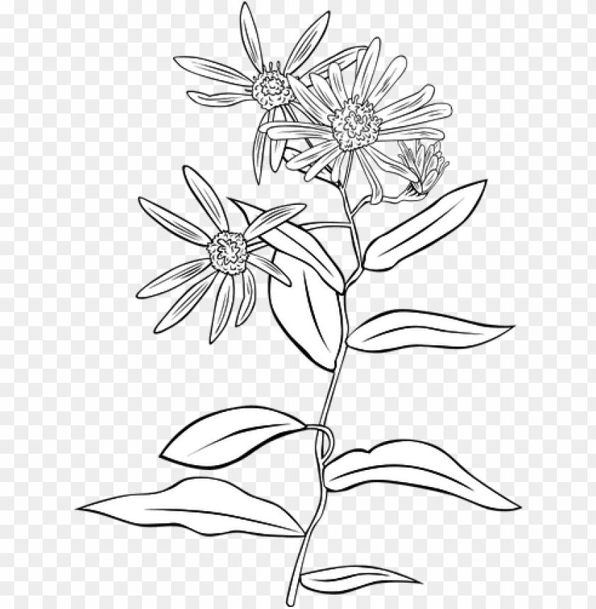 free PNG 5591 flower line drawing clip art free public domain - flower line drawing transparent PNG image with transparent background PNG images transparent