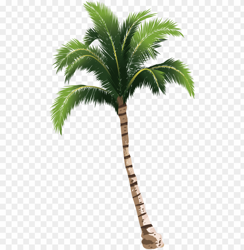a coconut tree transprent - palm tree png hd PNG image with transparent background@toppng.com