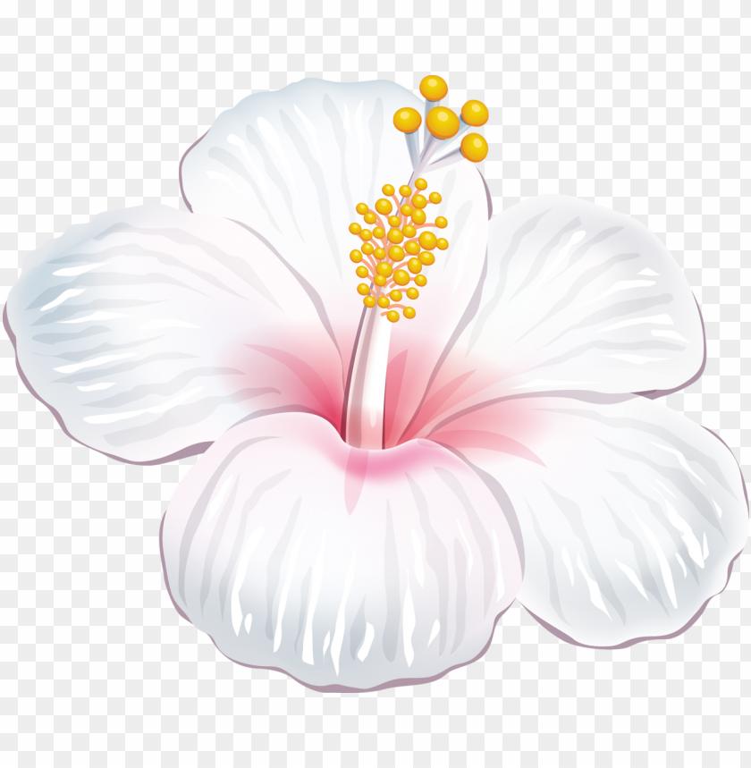 free PNG a dc db d orig png - flores tropicais brancas PNG image with transparent background PNG images transparent