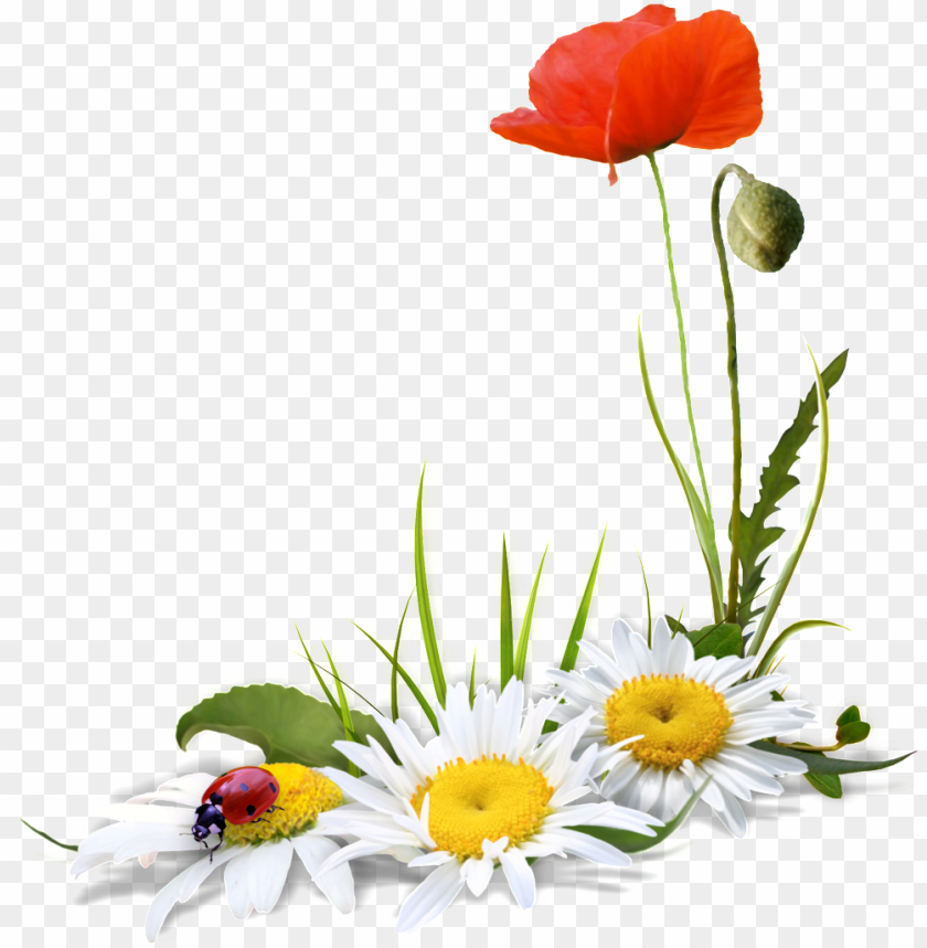 A Transparent Of Flowers And Ladybugs Free Flores Fundo