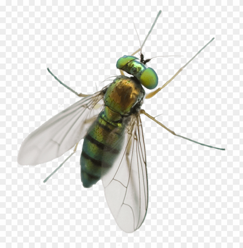 free PNG a1 exterminators greenhead fly silo control - horse fly PNG image with transparent background PNG images transparent