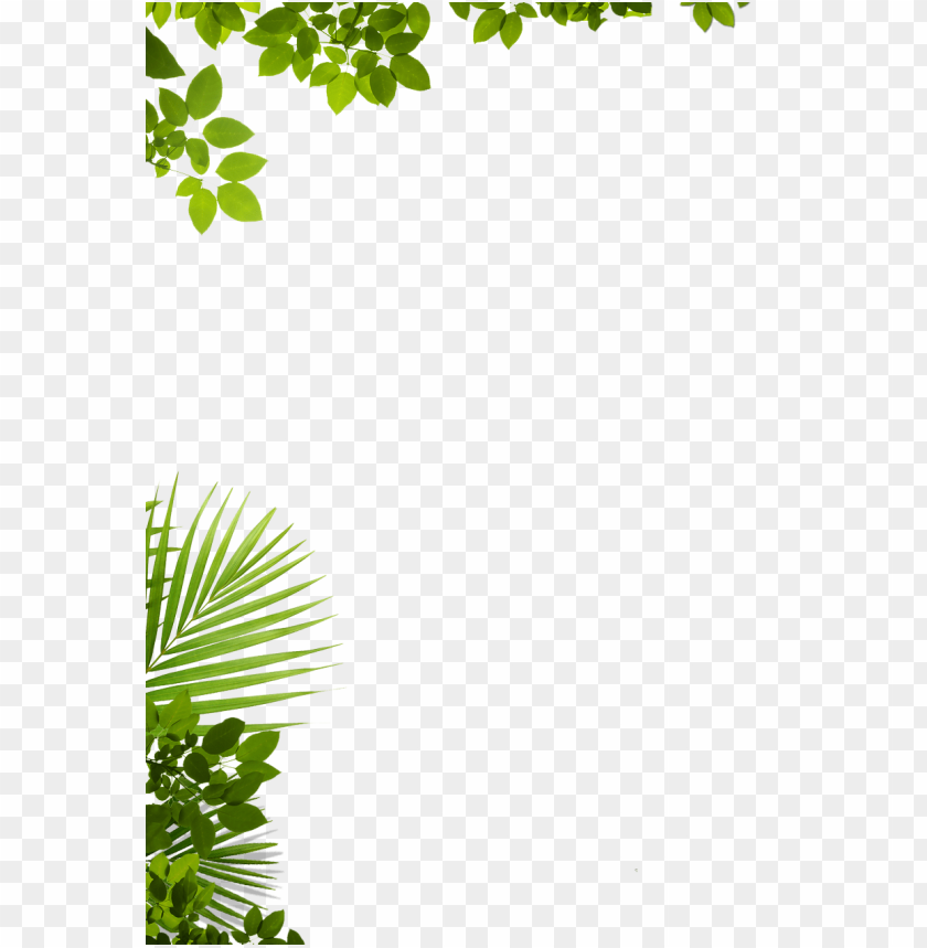 free PNG about us adventure zip lines punta cana - window decal: through the tree (window decal), 70x50cm. PNG image with transparent background PNG images transparent