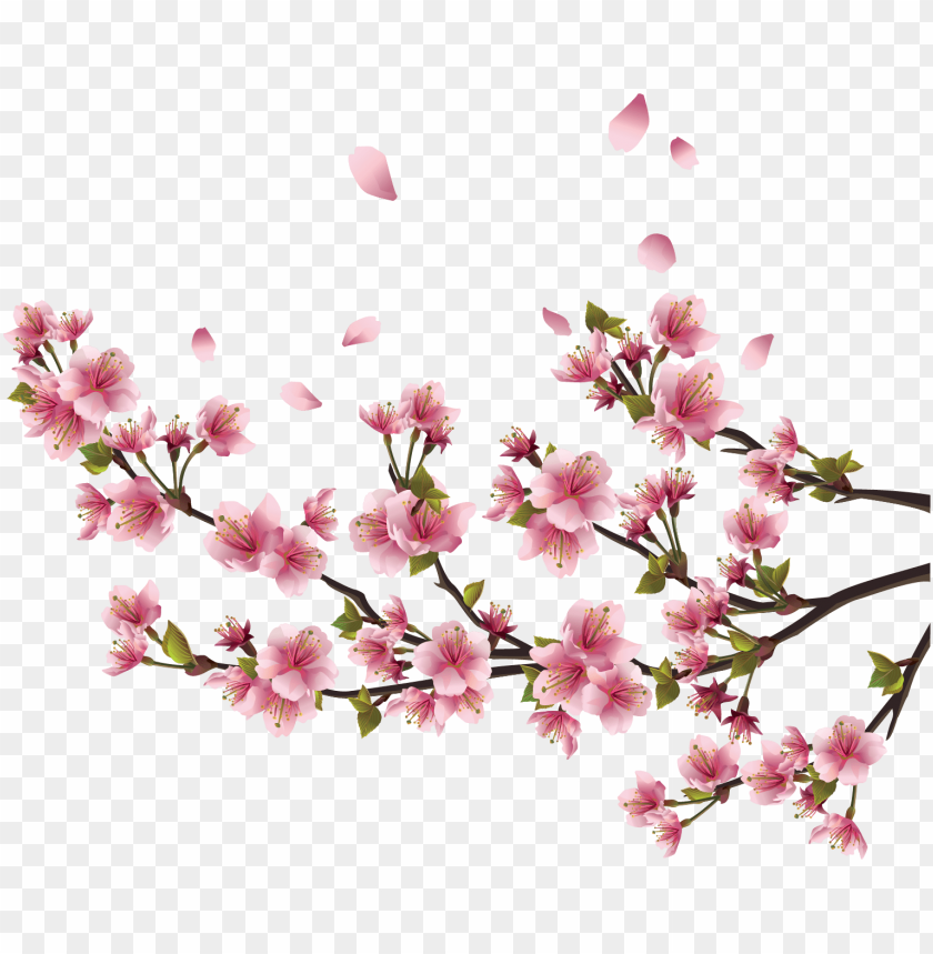 free PNG adesivo de parede flor de cerejeira sakura - p 94x64cm PNG image with transparent background PNG images transparent