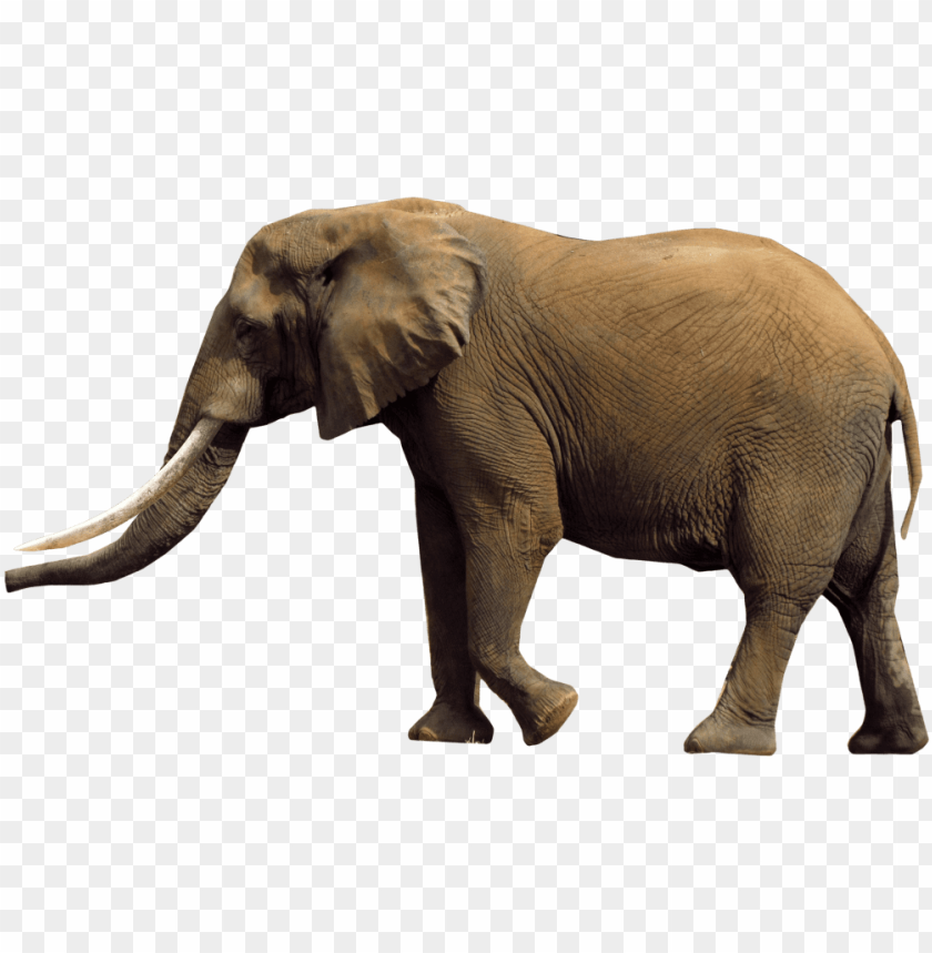 African Elephant Png Elephants Png Image With Transparent Background Toppng Find & download free graphic resources for elephant. african elephant png elephants png