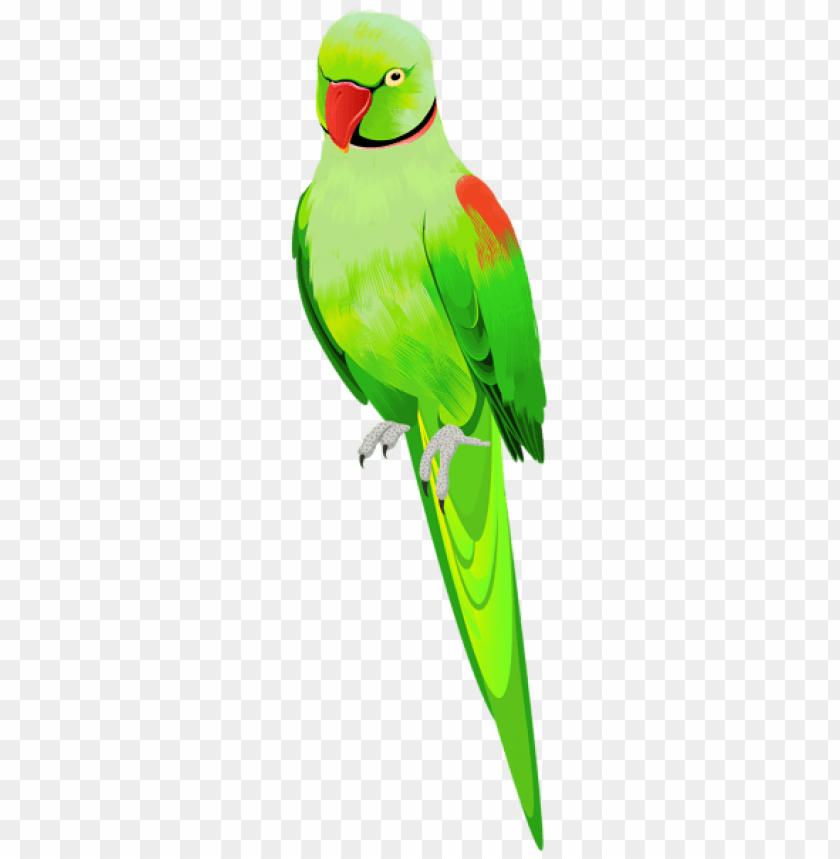 free PNG Download alexander parrot png images background PNG images transparent