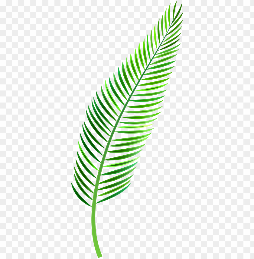 free PNG alm leaf png clip art - tropical leaf watercolor PNG image with transparent background PNG images transparent