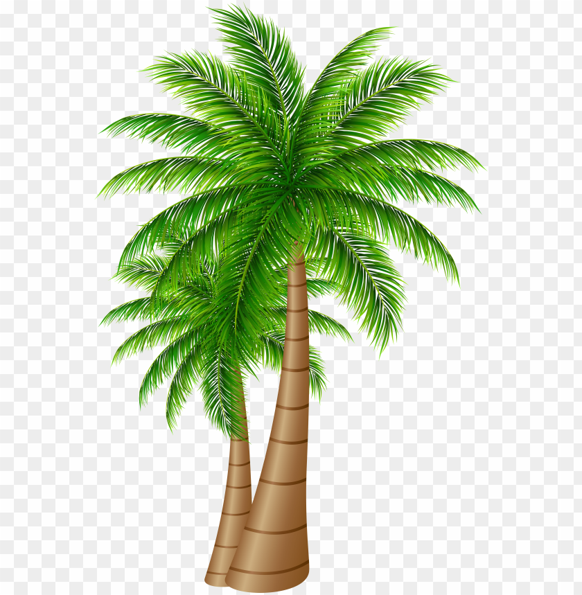 free PNG alm tree clipart transparent png - date palm tree PNG image with transparent background PNG images transparent