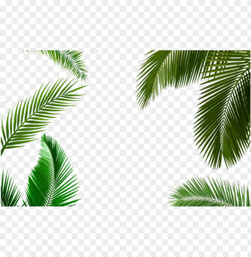 free PNG alm tree leaf, palm tree transparent leaf, palm tree - life by design (ll) PNG image with transparent background PNG images transparent