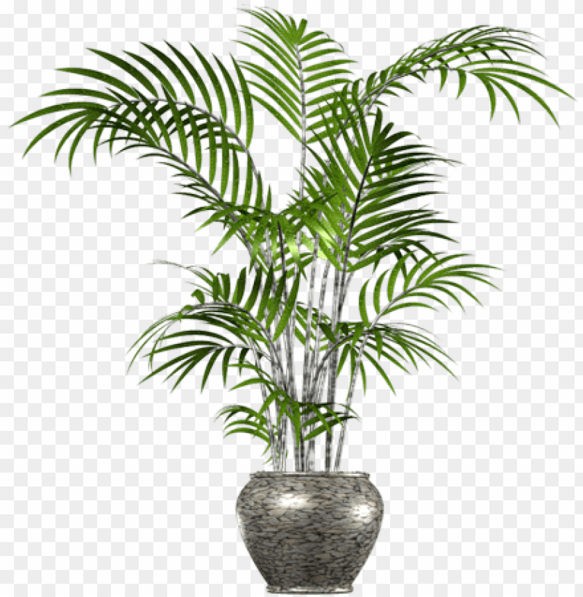 free PNG alm tree png in pot - palm tree in pot PNG image with transparent background PNG images transparent