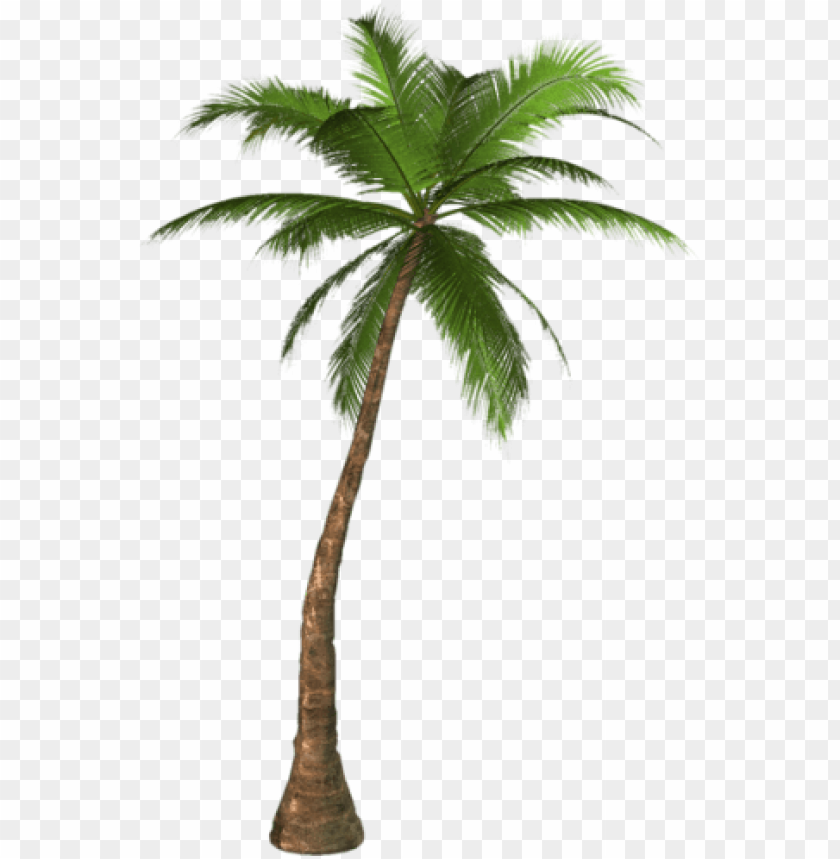 free PNG alm tree png, palm tree clip art, palm trees, tree - palm tree PNG image with transparent background PNG images transparent