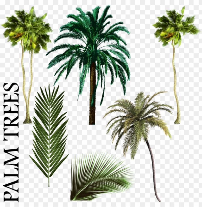 free PNG alm tree vector png palmiye ağacı karışımı psd, vektör - free palm tree psd PNG image with transparent background PNG images transparent