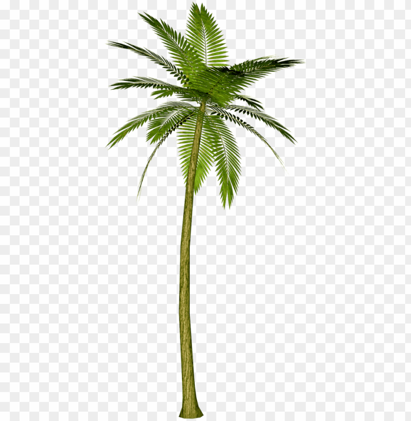 free PNG alm tree watercolor png - transparent background palm tree PNG image with transparent background PNG images transparent