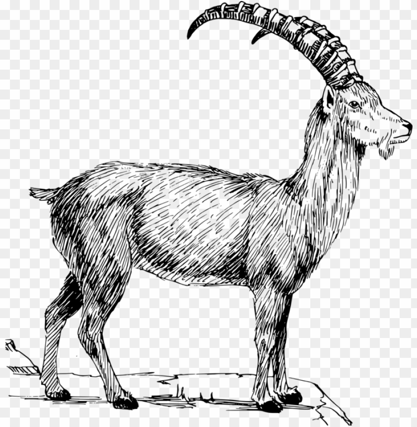 free PNG alpine goat alpine ibex sheep caprinae mountain goat - wild goat clip art PNG image with transparent background PNG images transparent