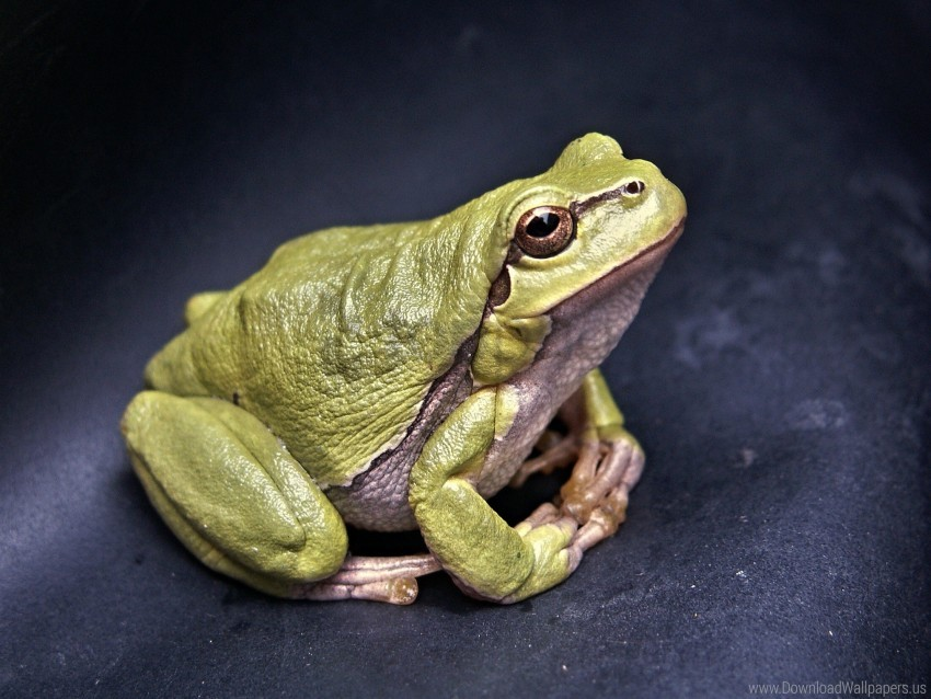 free PNG amphibian, frog, green wallpaper background best stock photos PNG images transparent