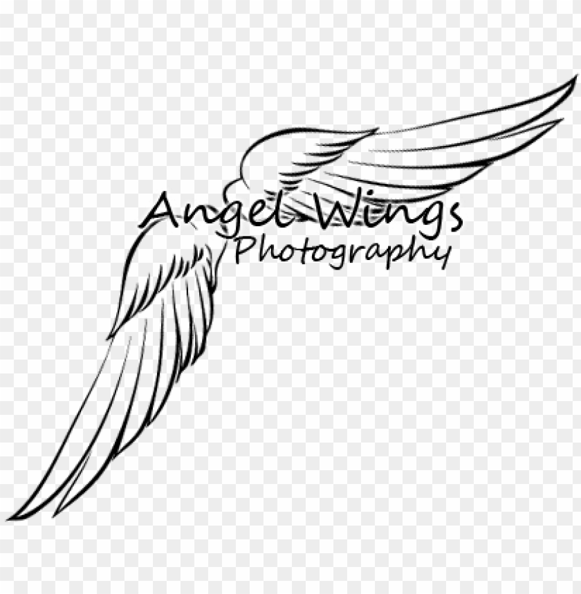 free PNG angel wings photography logo - photography logos with wings PNG image with transparent background PNG images transparent