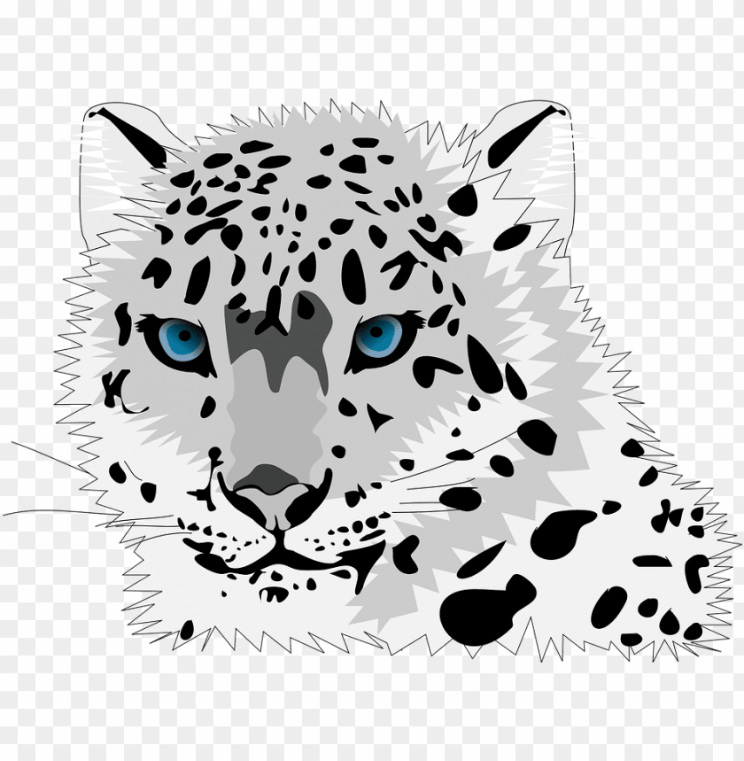 Animal Cat Leopard Snow Leopard Wild Cat C Cartoon Snow Leopard Face Png Image With Transparent Background Toppng