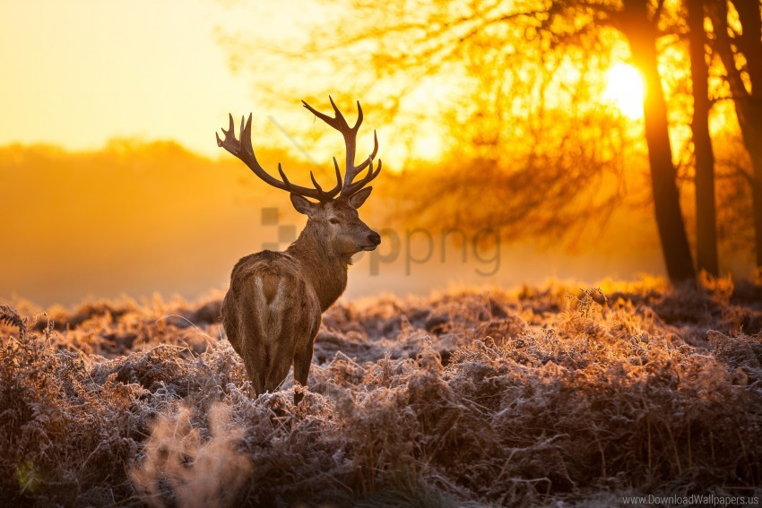 free PNG animal, deer antlers, forest, nature, sunset, trees wallpaper background best stock photos PNG images transparent