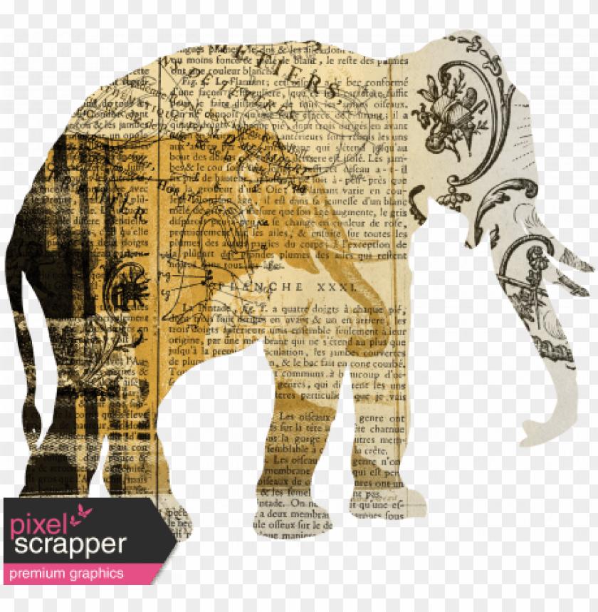 free PNG animal kingdom PNG image with transparent background PNG images transparent