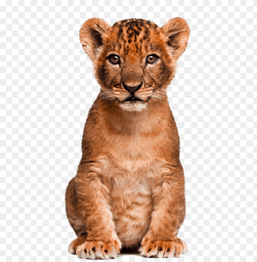 free PNG animals clipart png,cartoon animals png,cute animal - cb editing png animal PNG image with transparent background PNG images transparent