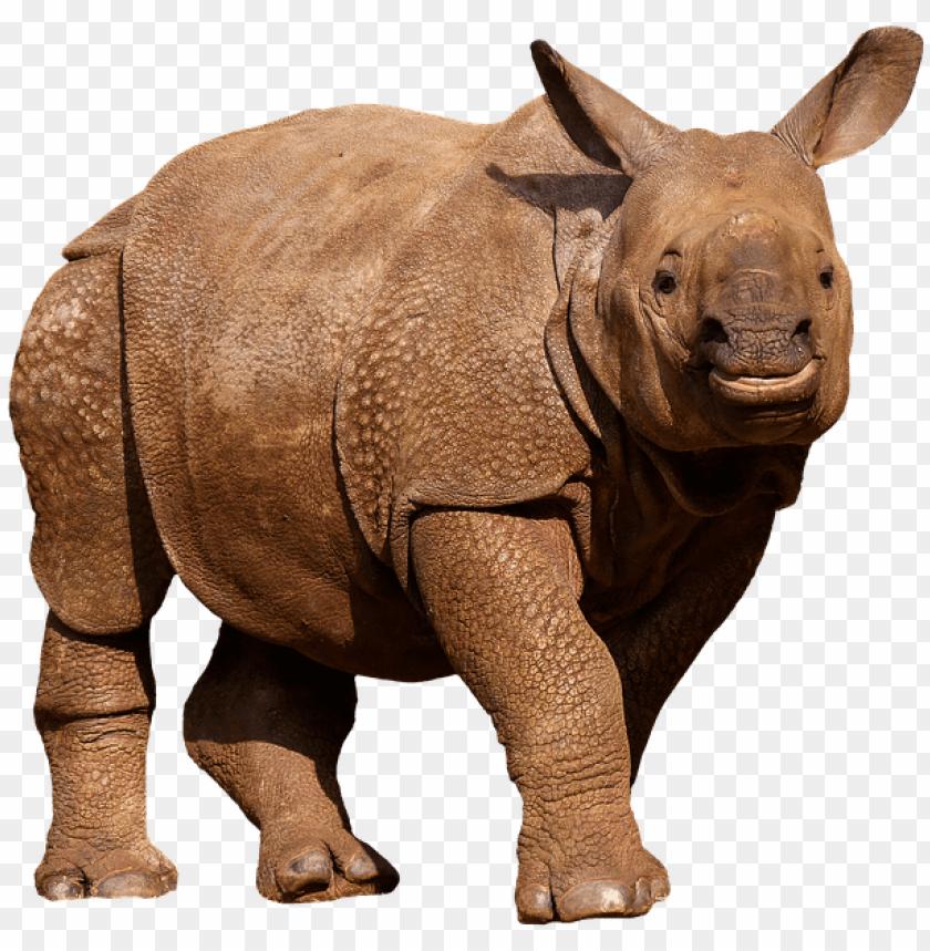 free PNG animals, wild animals, rhino, panzer, thick skin - zoo animals png white background PNG image with transparent background PNG images transparent