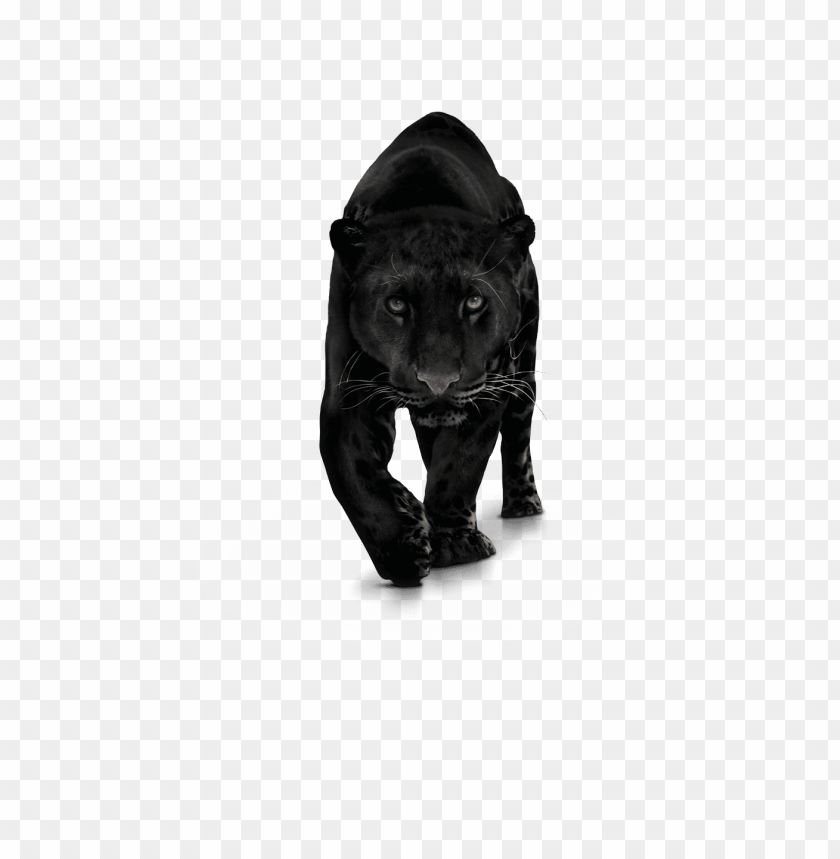 free PNG anther transparent png photo - panther PNG image with transparent background PNG images transparent