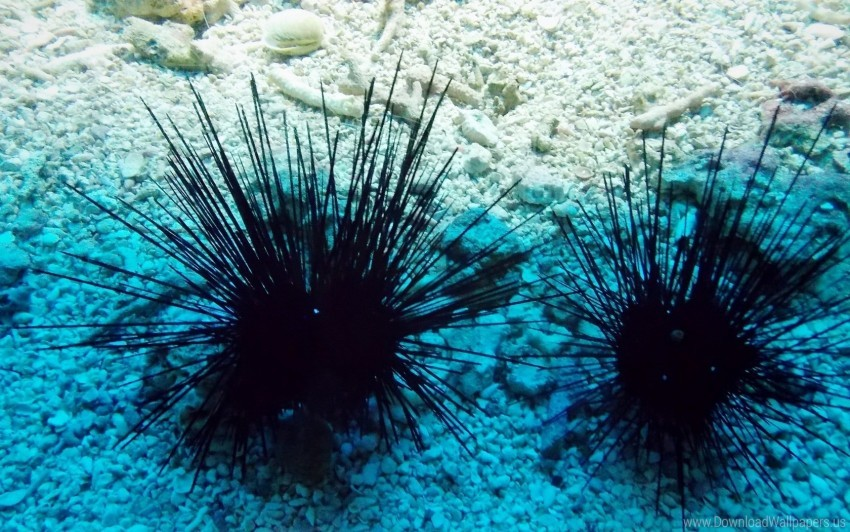 free PNG aquarium, rocks, sea urchin wallpaper background best stock photos PNG images transparent