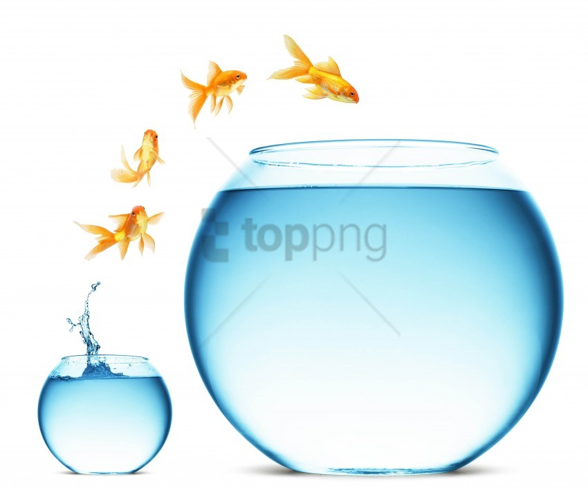 free PNG aquariums, change, fish, jump, white background wallpaper background best stock photos PNG images transparent