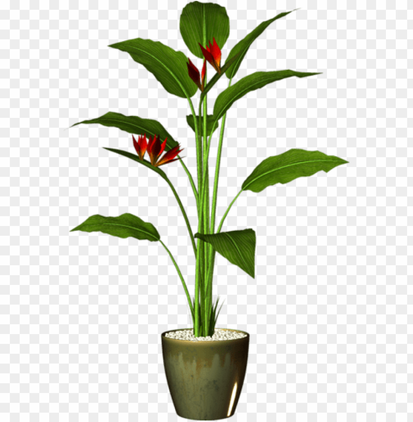 free PNG arden pot plant - pot plant PNG image with transparent background PNG images transparent