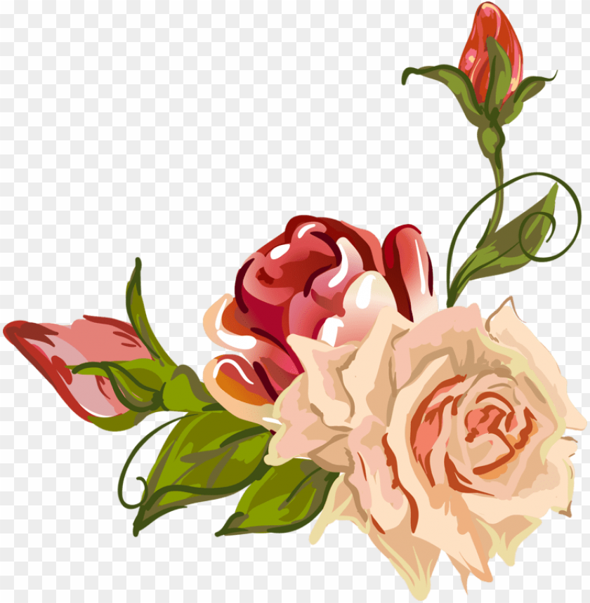 free PNG arden roses centifolia roses flower petal drawing - garden roses PNG image with transparent background PNG images transparent