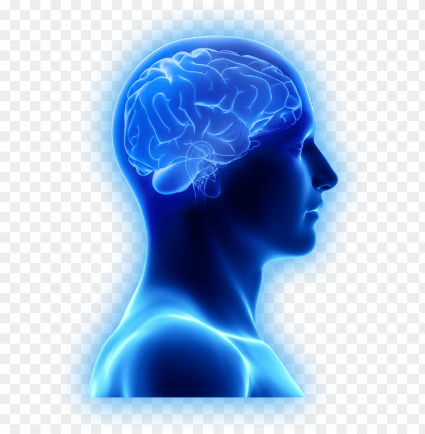 free PNG are brain supplements only for the aging brain - brain images in PNG image with transparent background PNG images transparent