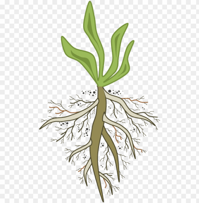 free PNG are you in the pursuit of root - root cause analysis PNG image with transparent background PNG images transparent