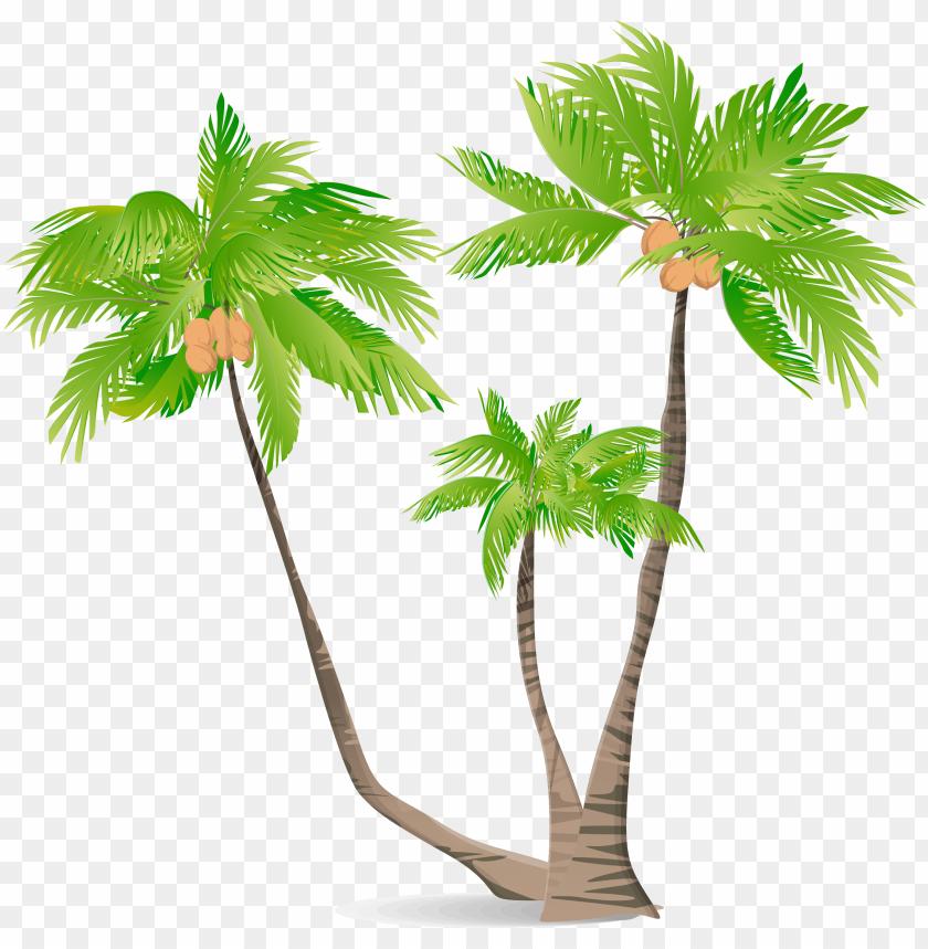 free PNG arecaceae green coconut illustration - coconut tree illustratio PNG image with transparent background PNG images transparent