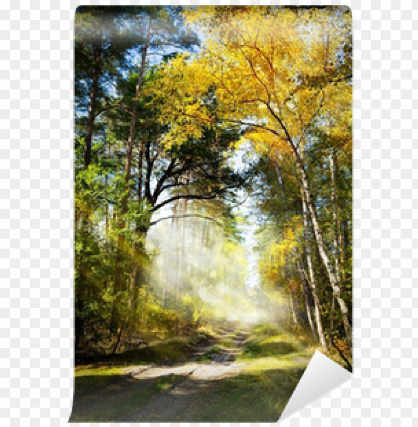 free PNG art beautiful morning in the misty autumn forest with - forest PNG image with transparent background PNG images transparent