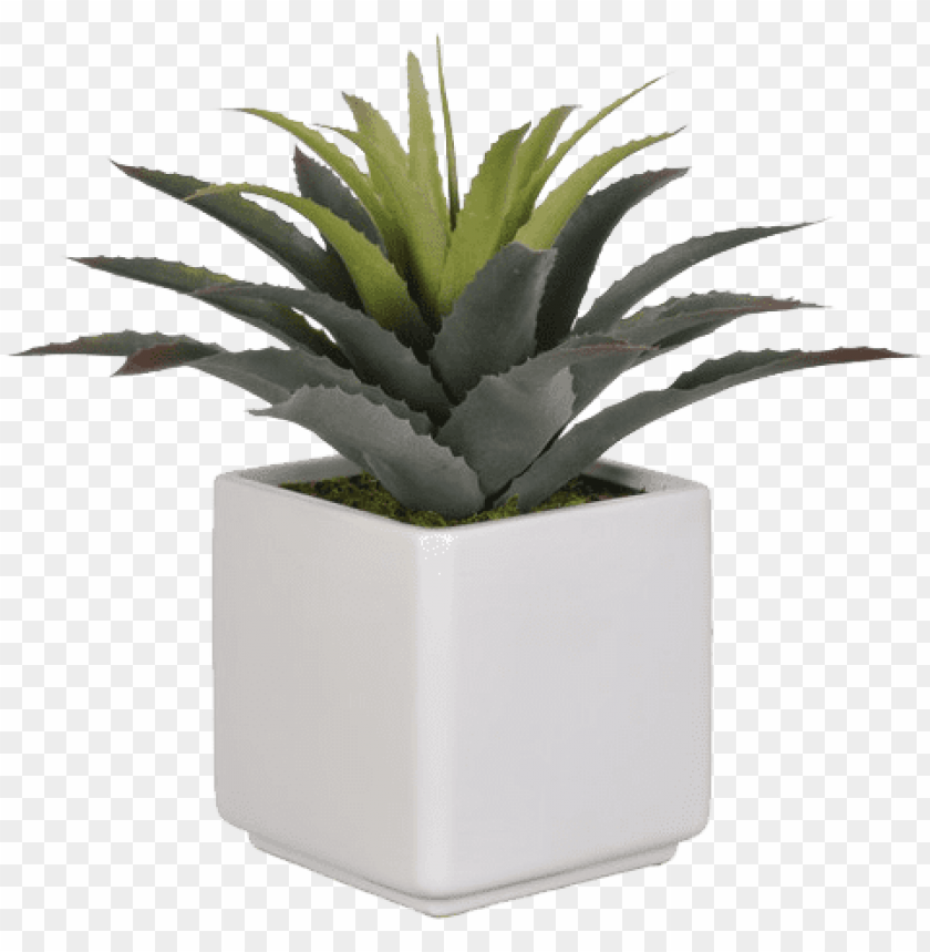 Artificial Star Succulent Desk Top Plant In Pot Succulent In Pot Png Image With Transparent Background Toppng