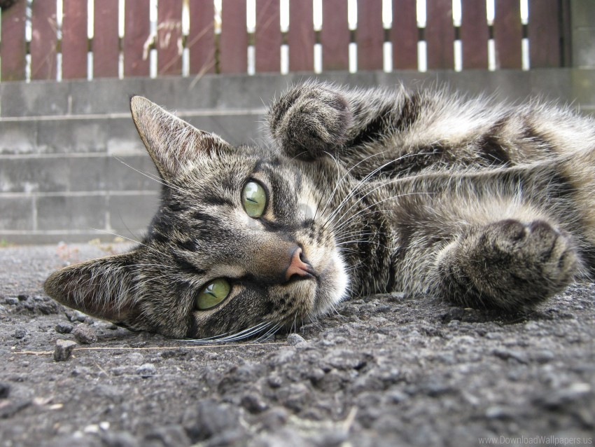 free PNG asphalt, cat, muzzle down wallpaper background best stock photos PNG images transparent