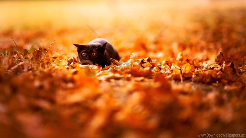 free PNG autumn, background, bright, cat, color, leaves, nature wallpaper background best stock photos PNG images transparent