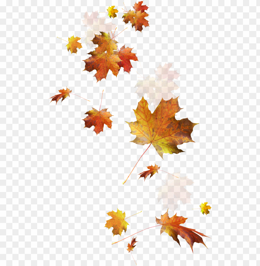 free PNG autumn color leaves leaf falling download hd png clipart - transparent autumn leaves PNG image with transparent background PNG images transparent
