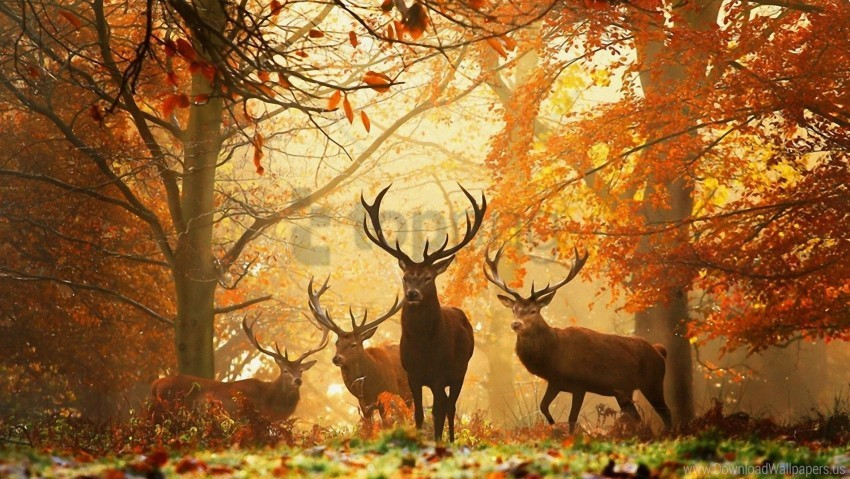 free PNG autumn, deer, forest, grass, leaves, rays, sun wallpaper background best stock photos PNG images transparent
