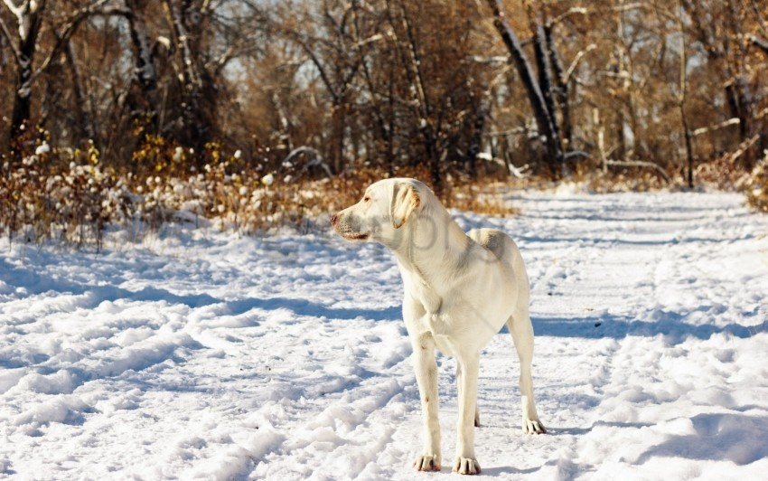 free PNG autumn, dog, friend, snow wallpaper background best stock photos PNG images transparent
