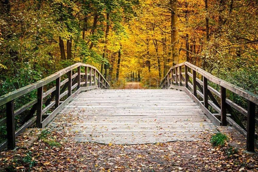 free PNG autumn forest landscape with bridge hd wallpaper background best stock photos PNG images transparent