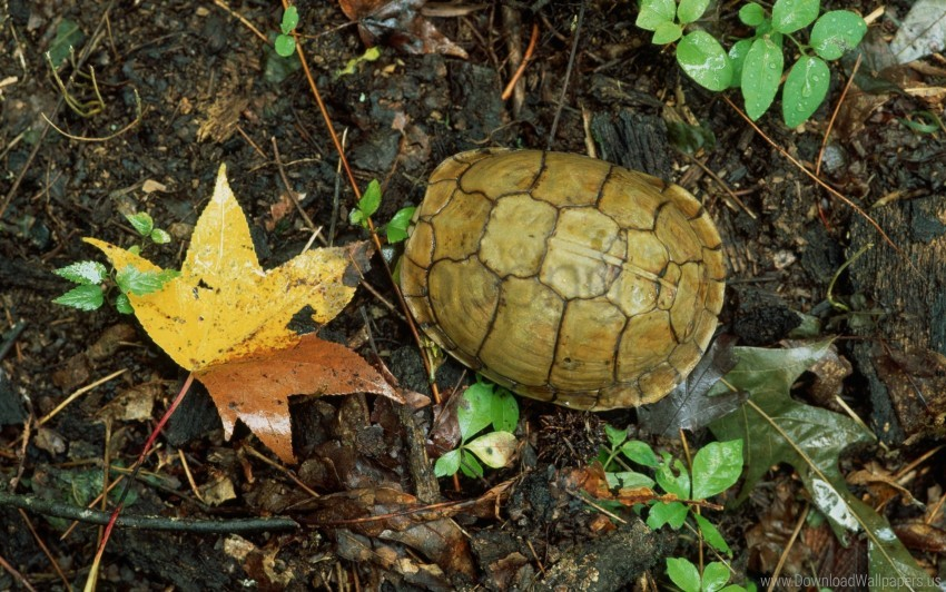 free PNG autumn, grass, leaves, turtle wallpaper background best stock photos PNG images transparent