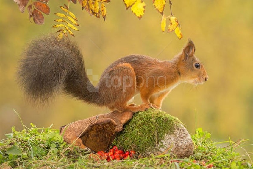 free PNG autumn landscape with squirrel wallpaper background best stock photos PNG images transparent