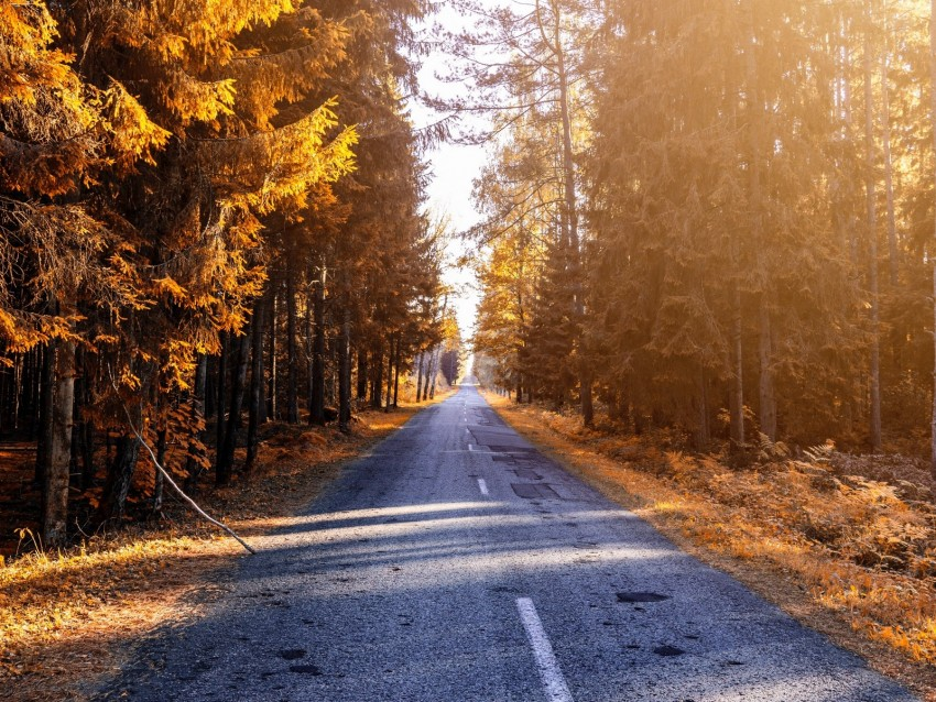 free PNG autumn, road, forest, sunlight background PNG images transparent