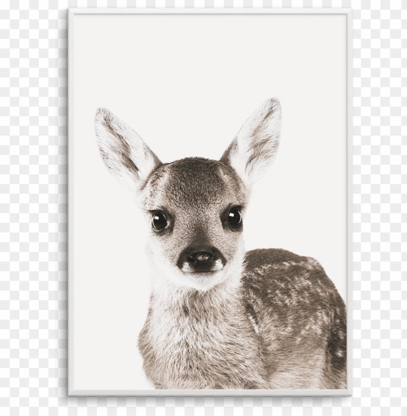 free PNG baby deer - baby deer white background PNG image with transparent background PNG images transparent